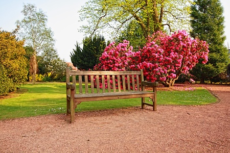 Beautiful, old park with azalea trees in Spring, Scotland Reklamní fotografie