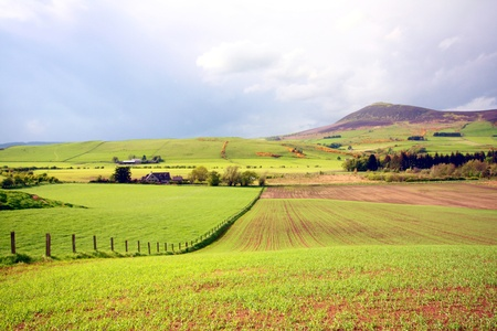 Spring landscape with fields of wheat in Scotland photo