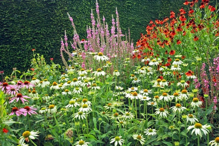 Beautiful meadow of garden flowers