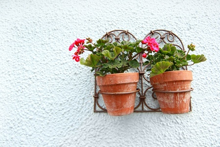 hanging flowers: Geranium in the flower pots hanging on the wall  Stock Photo
