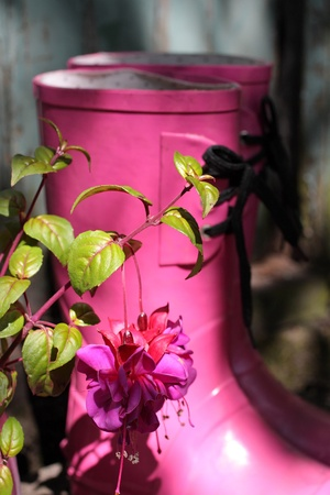wellingtons: Pink wellingtons and fuchsia in the garden  Stock Photo
