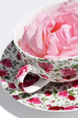 A pink rose in a teacup  photo