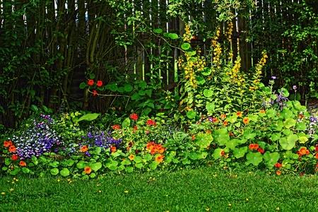 lobelia: Beautiful Summer garden  Stock Photo