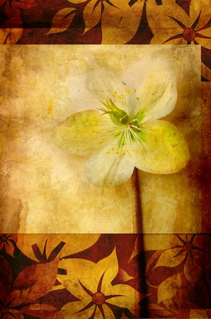Grunge background with hellebora photo