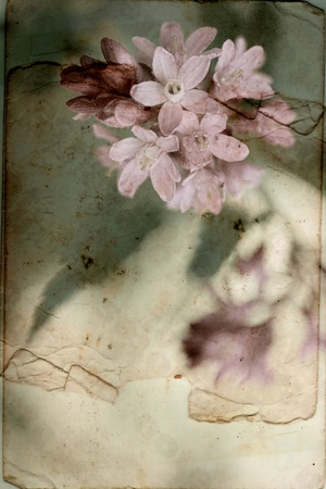 Vintage background with Spring flowers  Stock Photo - 13043442