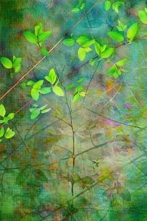Natural leaves grunge beautiful, artistic springtime background  photo