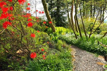 meadow: Beautiful Spring garden with red azalea and cobblestones path