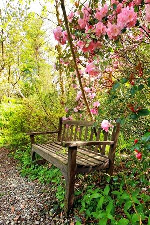 Beautiful romantic garden with wooden bench and azalea trees photo
