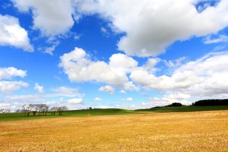 Beautiful Spring landscape in Scotland  photo
