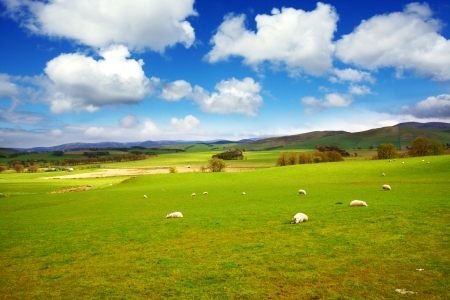 Beautiful Spring landscape with sheep and hills in Scotland  photo