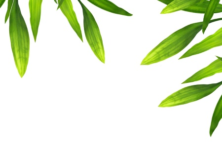 Beautiful bamboo leaves border on white  Stock Photo