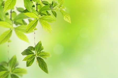 organic background: Springtime background with green leaves  Stock Photo
