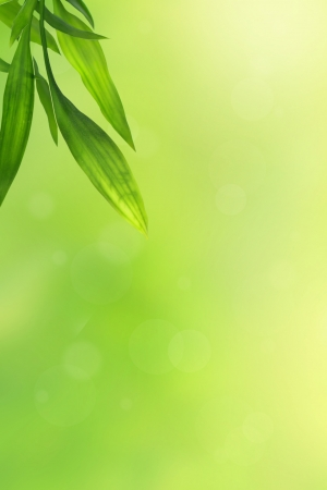 Beautiful green background with bamboo leaves  photo