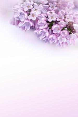 Mooie, romantische achtergrond met lila bloemen Stockfoto