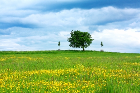 Scenic Scottish landscape with wildflowers Stock Photo - 14052006