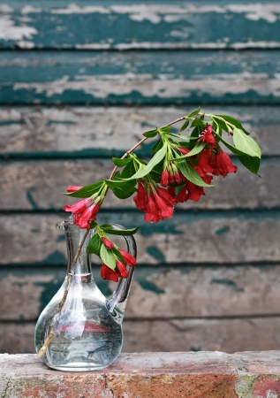 A branch of Spring flowers in a glass vase photo