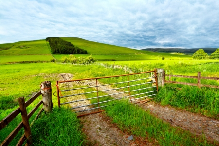 Spring rural landscape with a fence,  Scotland  Standard-Bild