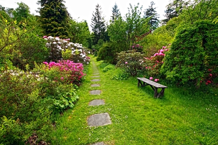 Beautiful, English garden with blooming rhododendrons in springtime photo