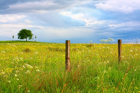 Scenic Scottish landscape with wildflowers anmd a lonely tree Stock Photo - 14064175