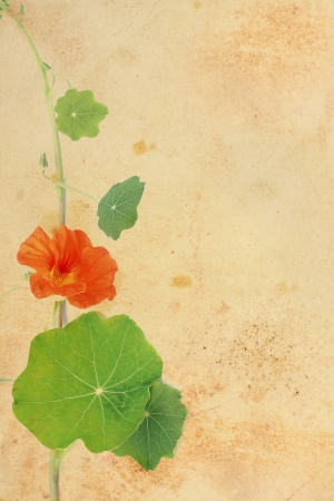 Pretty floral grungy background with red nasturtium  photo
