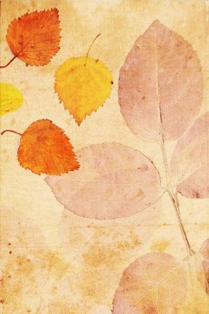 Beautiful vintage background with autumnal close up leaves  photo