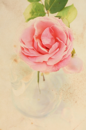 Pretty floral vintage background with pink rose
