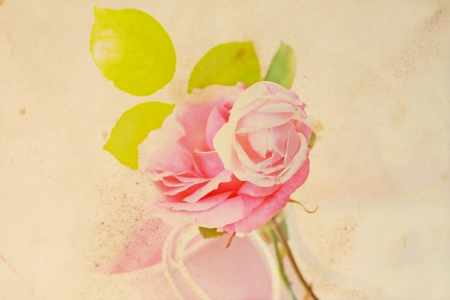 Pretty floral vintage background with pink rose photo