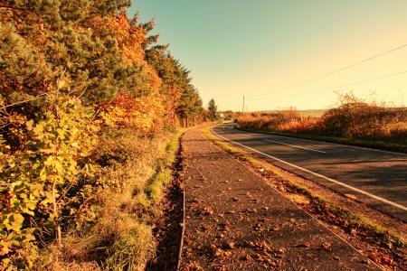 road autumnal: Beautiful autumnal road close up Stock Photo