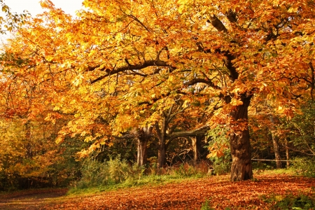 tree in autumn: Beautiful afternoon in the autumnal park  Stock Photo