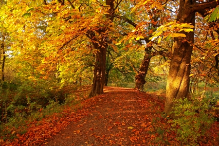Beautiful afternoon in the autumnal park  Stock Photo