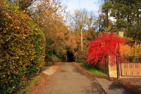 red bush: Autumnal road in the park with red bush