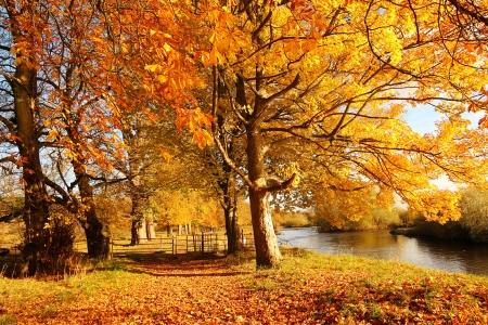 Beautiful Autumn in the Park, Scotland Stock Photo