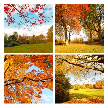 Beautiful, sunny autumn in the Scottish park, collage photo