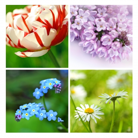 Springtime collage of beautiful flowers photo