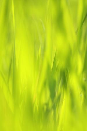 Beautiful Springtime grass close up background photo