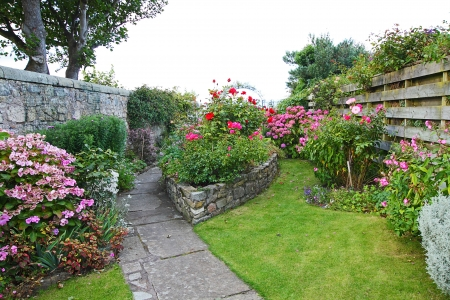 Beautiful, old, garden with blooming hydrangea and roses