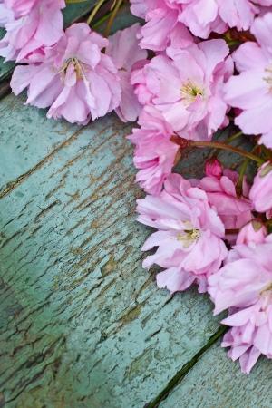 Japanese cherry blossom beautiful background  vintage style Stock Photo - 19863121
