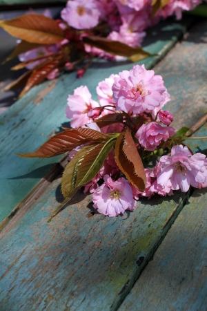 Japanese cherry blossom beautiful background  vintage style Stock Photo - 19863107
