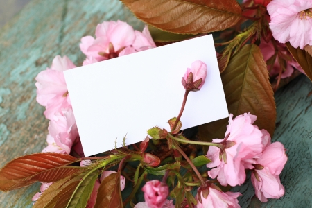japanes: Japanes tree blossom with a blank note, add your text
