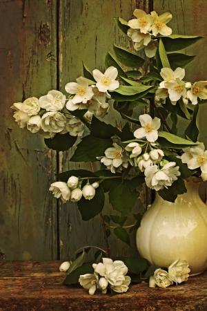 florero: Flores de jazm�n en un florero de estilo vintage Foto de archivo
