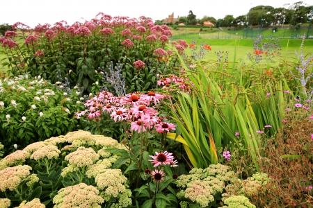 purpurea: Beautiful summer flowers in the park