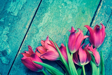 painted wood: Red tulips