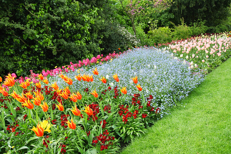 Spring tulips in St James Park, in London  photo