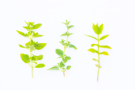 Fresh herbs from the garden on white background photo