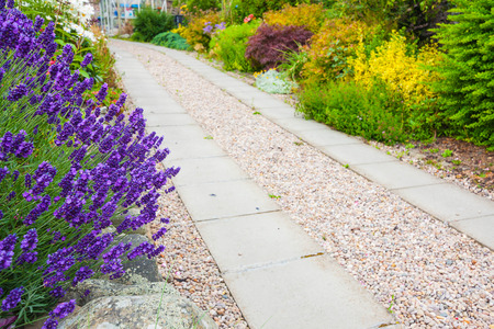 a gravel pathway between formal beds of lavender leading to an old sundial and trimmed hedges beyond. Horizontal format.
