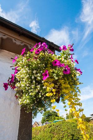 hanging basket: Beautiful hanging basket close up