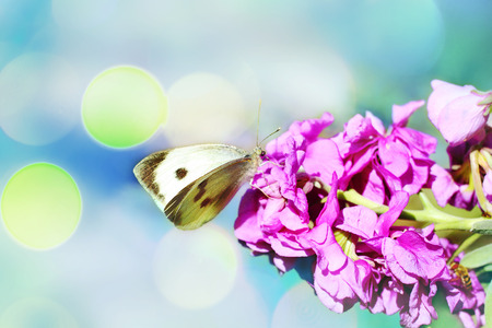 buterfly: White butterfly in the garden close up Stock Photo