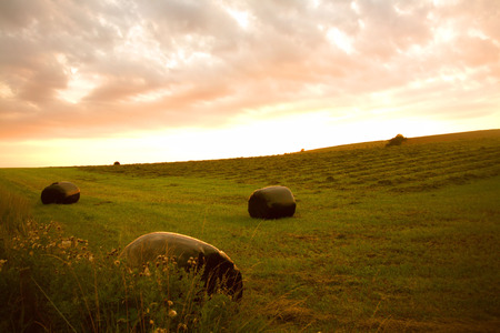 hay bales: Beautiful landscape with hay bales in the dusk