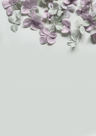subtle: Subtle artistic floral backgrodund with hortensia flowers