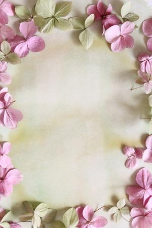 Subtile floral künstlerischen backgrodund mit Hortensiablumen Standard-Bild - 47743005